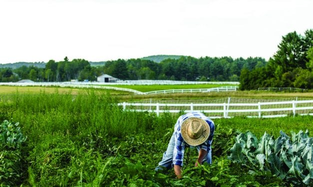 A call to gardeners from Cultivating Community