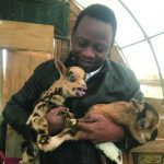 The Importance of goats in Somali culture