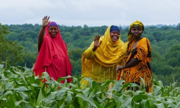 Fresh African vegetables available in Maine!